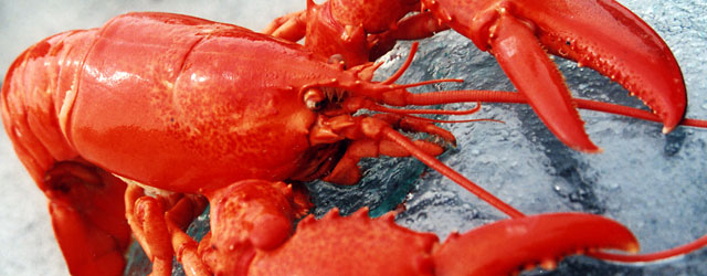 lobster header